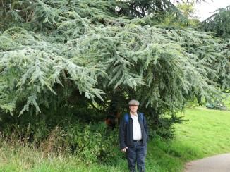 Atlantic Pine