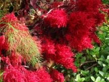 flora Peter