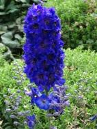 Queens College flora