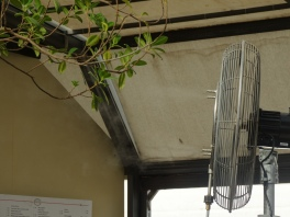 """mist ifying"" fan at the cafe"