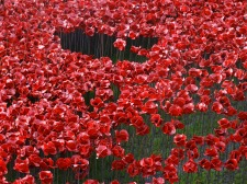 Our poppy is in there