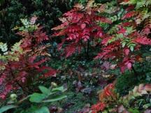 ferns in the glen
