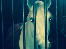 horse#3